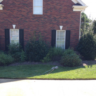 Garden maintenance in Greenville, SC